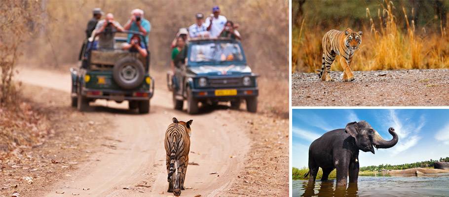 Wildlife Safari Packages